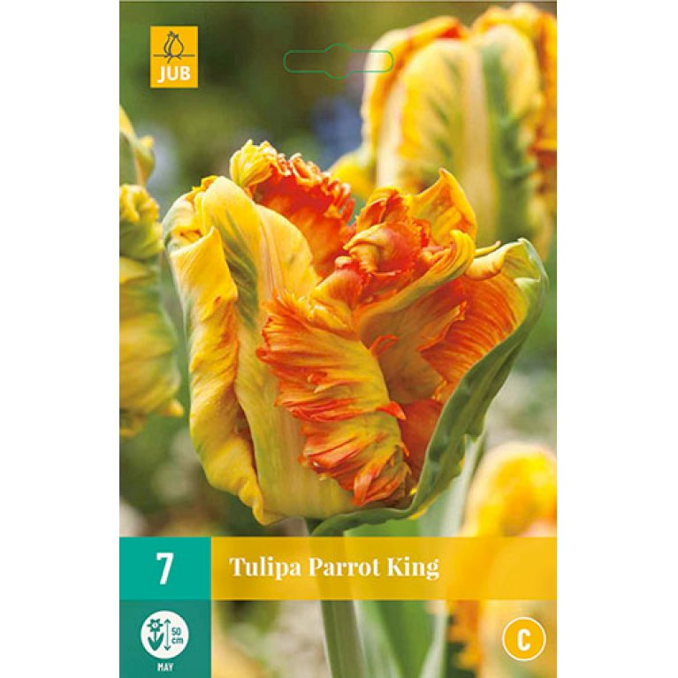 Tulips Parrot King