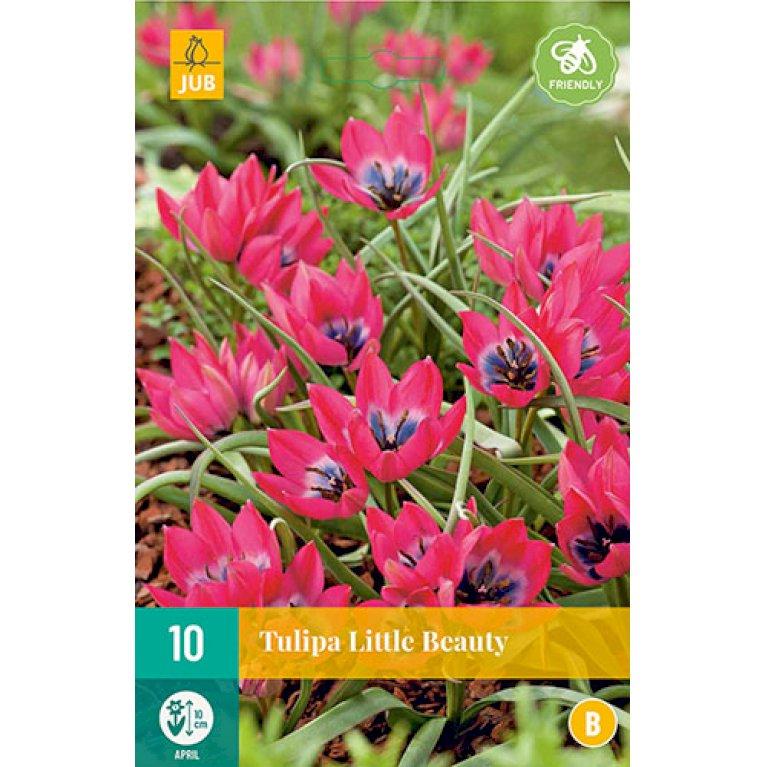 Tulipan 'Little Beauty'