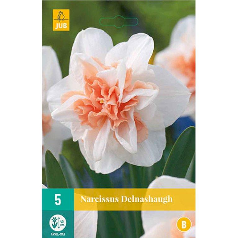 Narcissus Delnash0801h