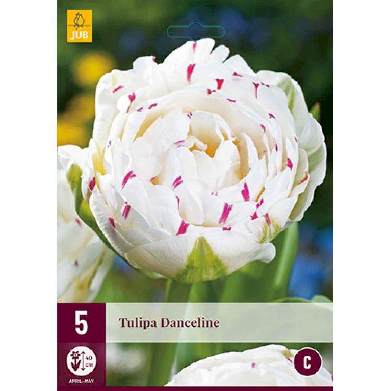 Tulips Danceline