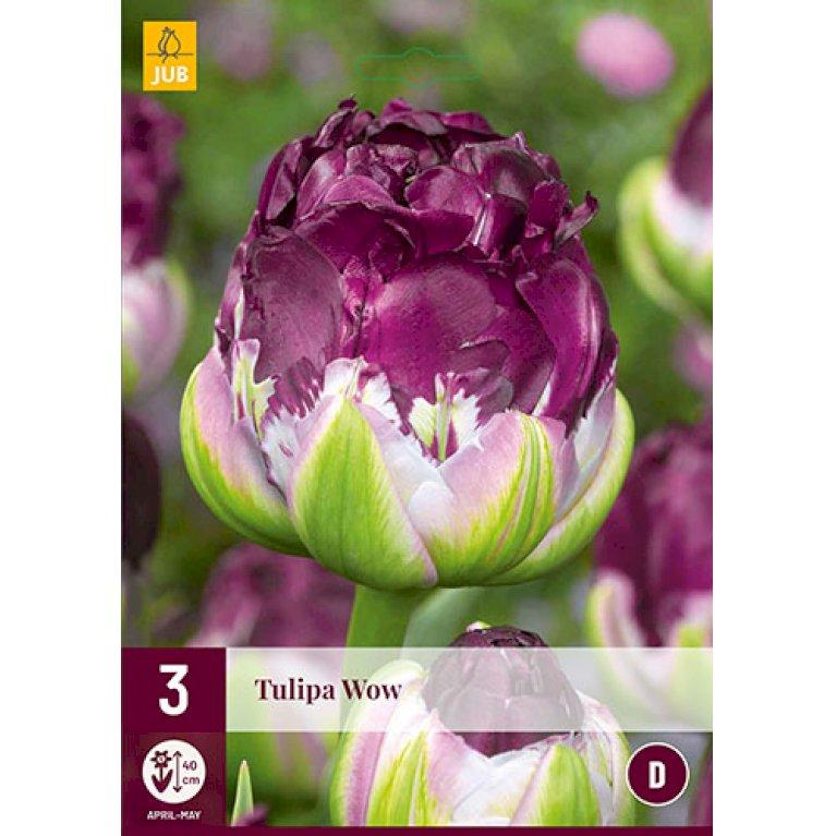 Tulips Wow®