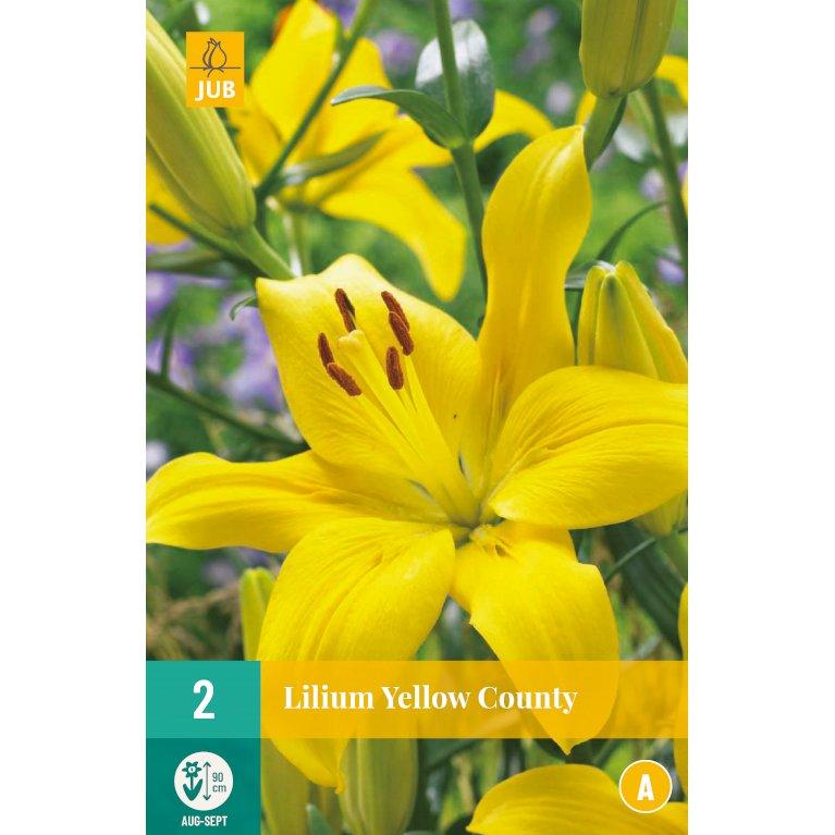 Lilium Yellow County