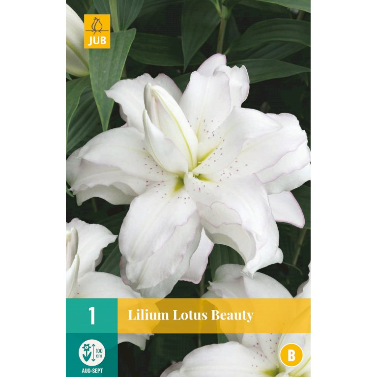 Lilje Lotus Beauty
