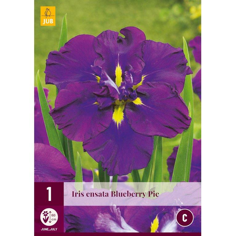 Iris Blueberry Pie
