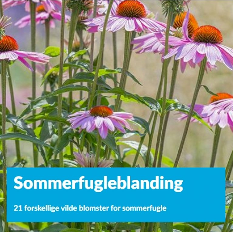 Sommerfugleblanding
