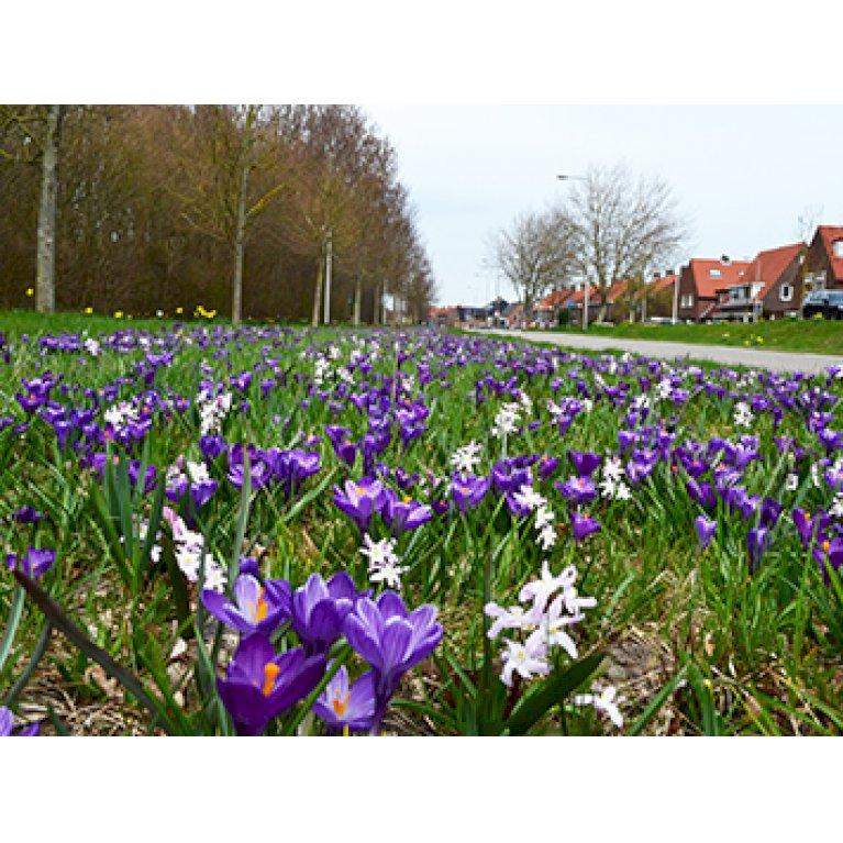 Blomsterblanding Leerdam 15m2
