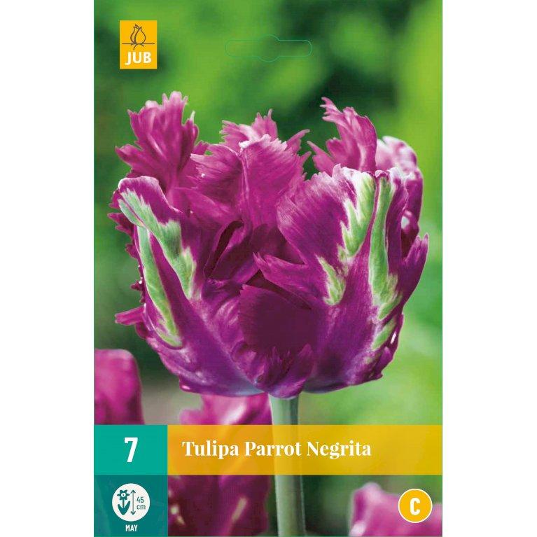 Tulipan 'Parrot Negrita'