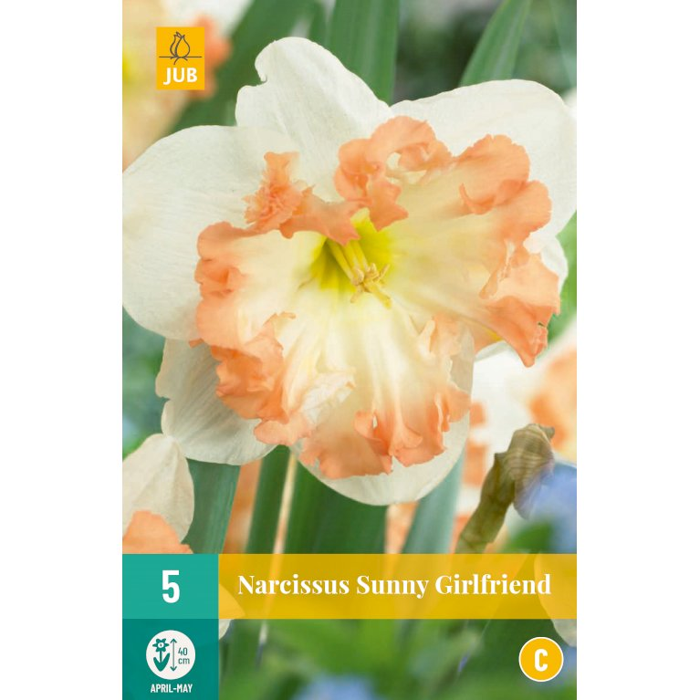 Narcissus Sunny Girlfriend
