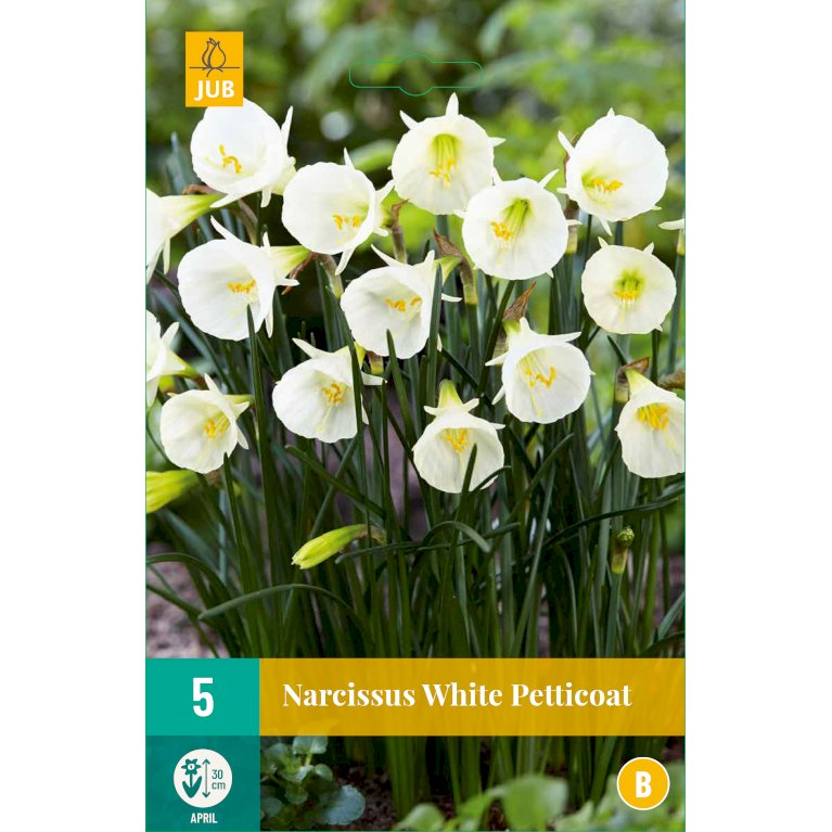 Påskelilje 'White Petticoat'