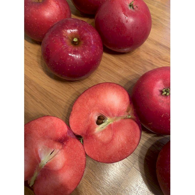 Æble 'Baya Marisa'