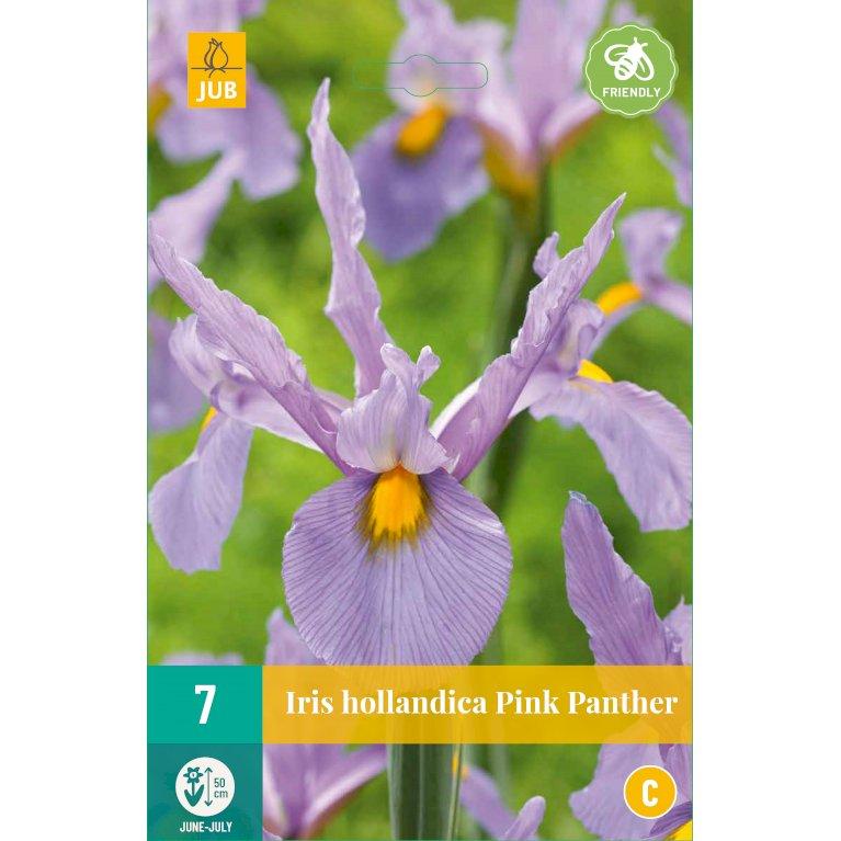 Iris Hollandica Pink Panther