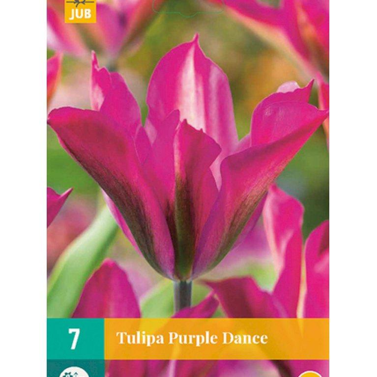 Tulipan 'Purple Dance'