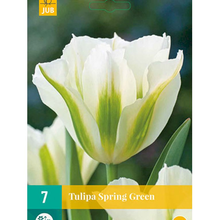 Tulipan 'Spring Green'