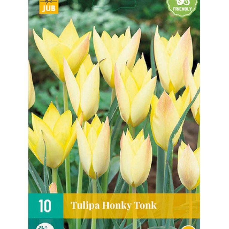 Tulipan 'Honky Tonk'
