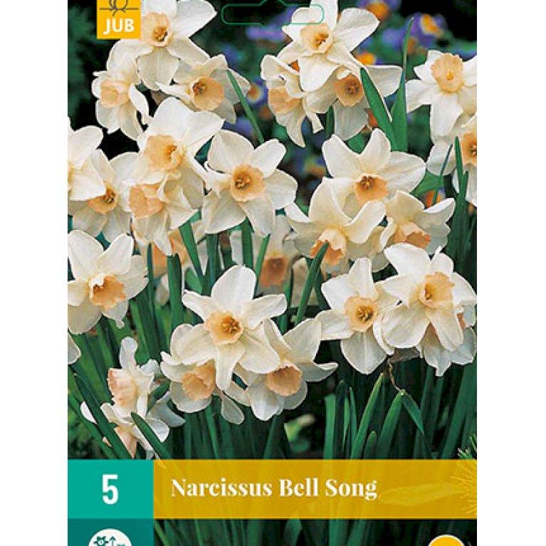 Pinselilje 'Bell Song'
