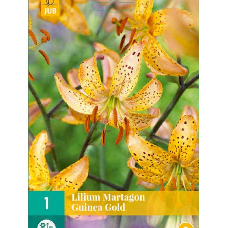 Liljer 'Martagon Guinea Gold'