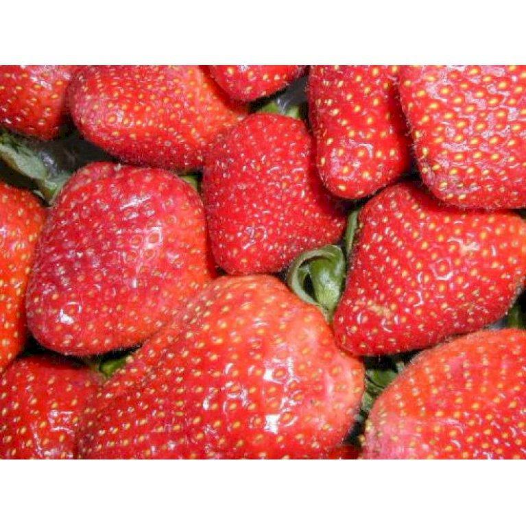 Jordbær `Sonata`