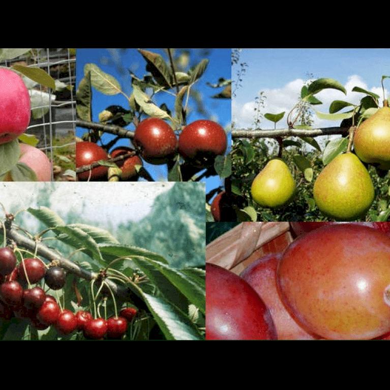 Frugtpakke