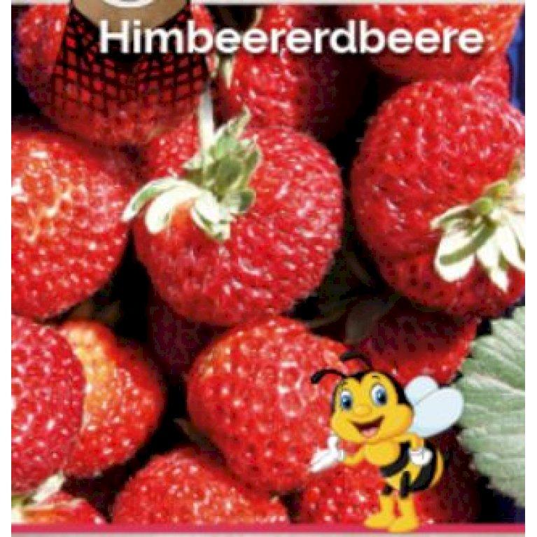 Jordbær x Hindbær 'Red Dream'