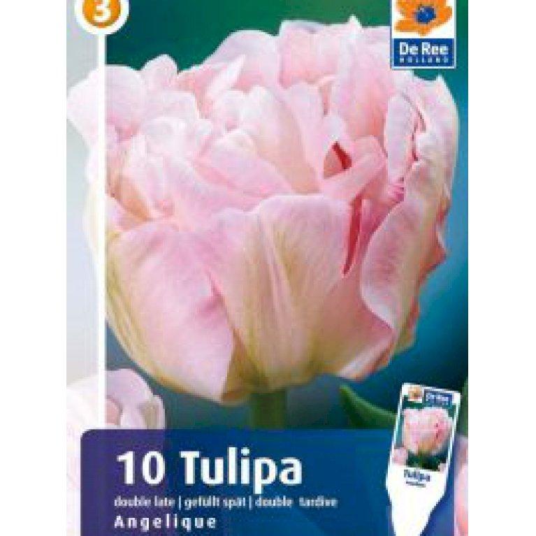 Tulipan, dobbelt sen 'Angelique' (nr. E76)