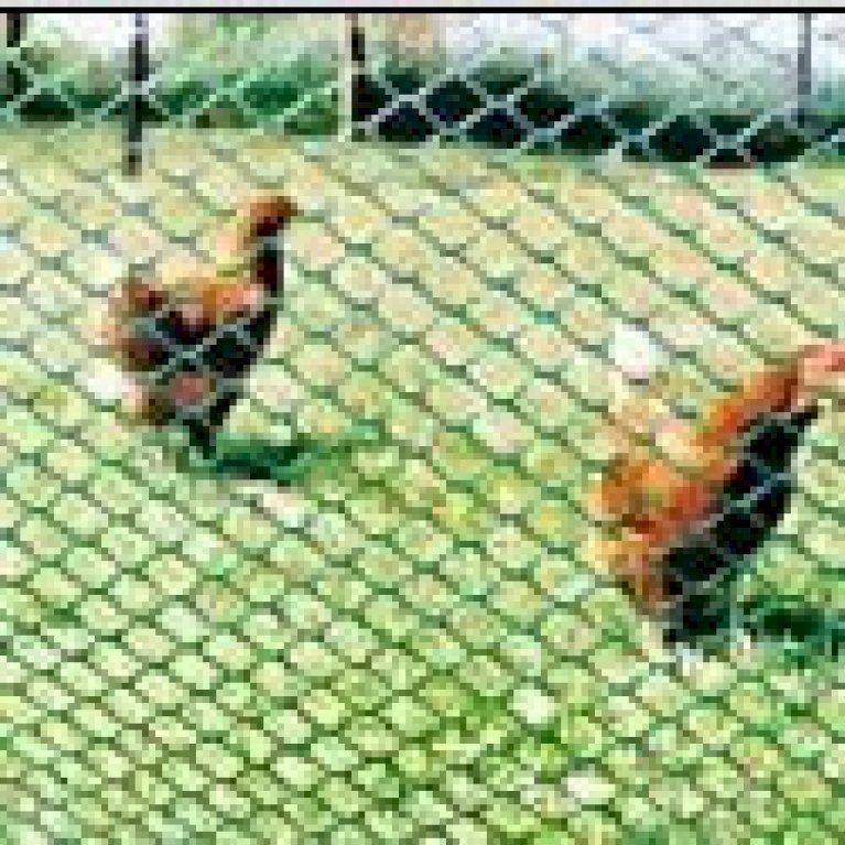 Hønsenet 80 cm. høj rulle á 10 m. grøn