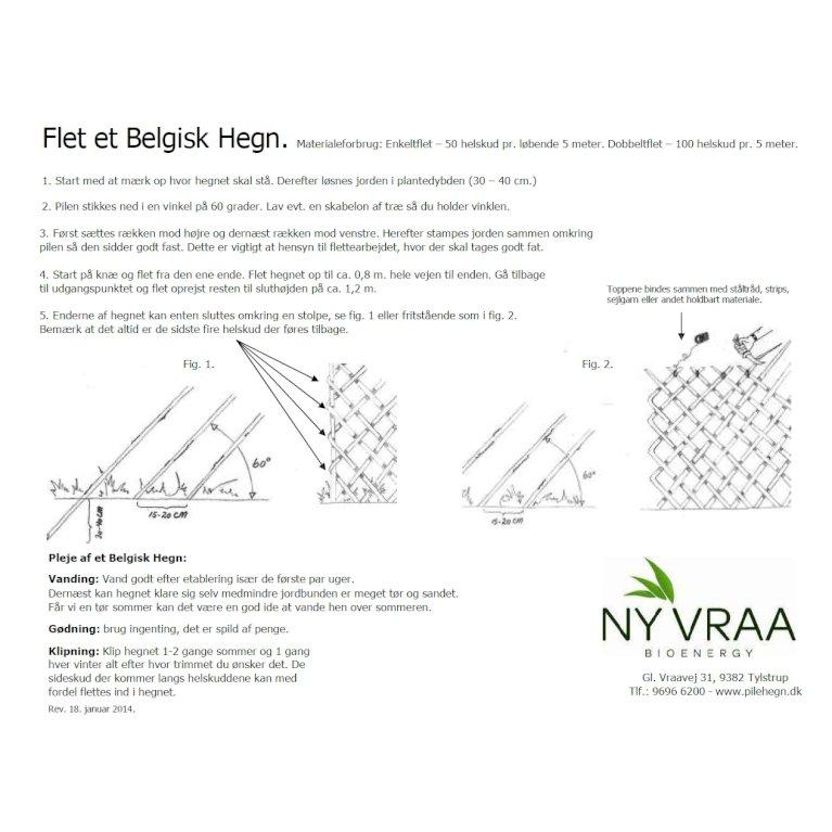 Belgisk pilehegn / enkeltflet