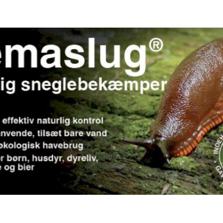 Nematoder mod Snegle ('Nemaslug')