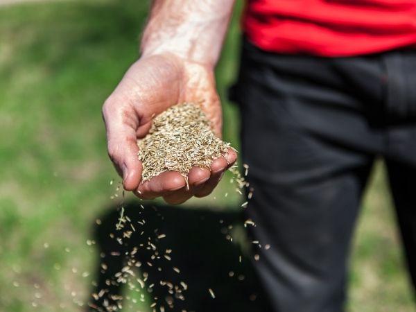 Sådan sår du græs: Få mest muligt ud af din nye græsplæne