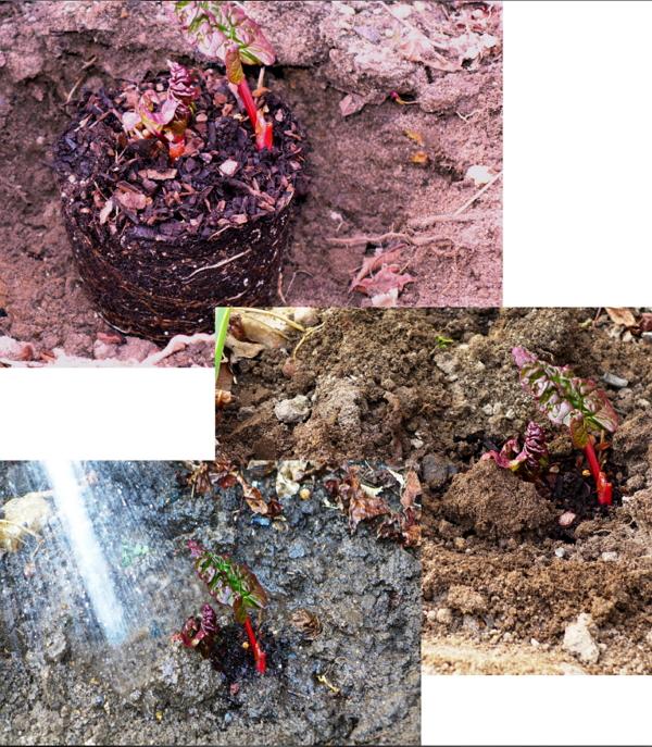 Miniguide til plantning af potteplanter