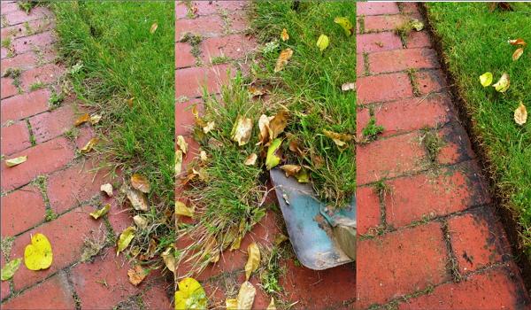 Skær græskanterne nu og få en flot lige kant der holder et halvt år.