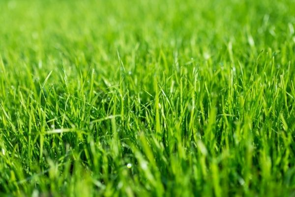 Sådan gøder du din græsplæne