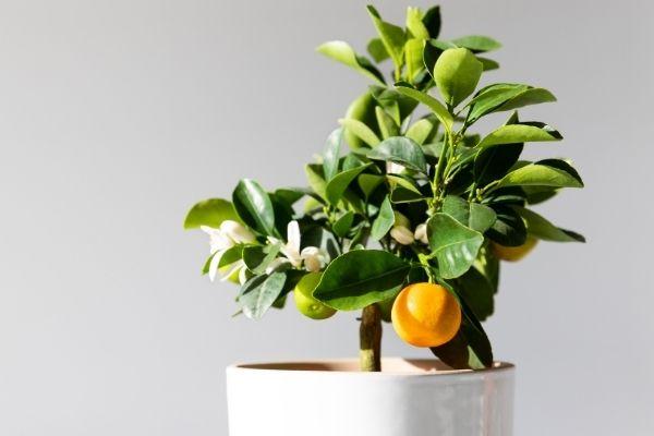 Sådan vinterbeskytter du dine eksotiske planter