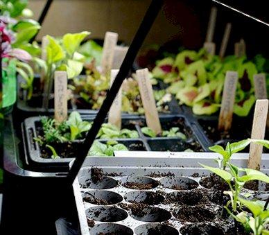 Forårsomplantning af haveplanter