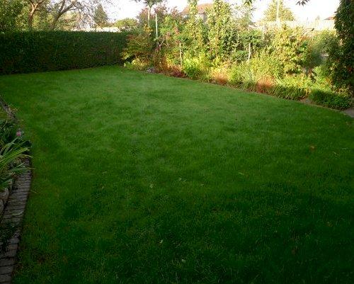 Omlægning af græsplænen