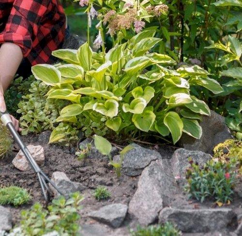 6 gode råd til haven i august