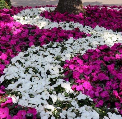 Bed 34 - Blomstervejen