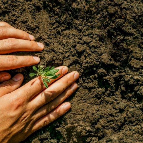 Gødskning og forbedring af jorden