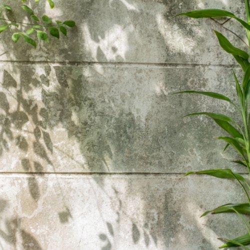 10 stauder du kan plante i skygge