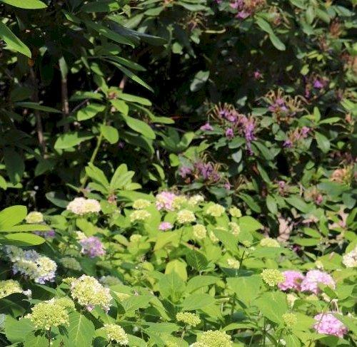 Bed 57 - Surbundsplanten