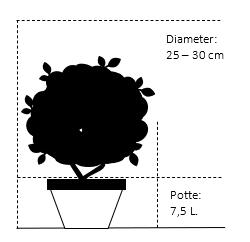 Potte 7,5 liter 25-30 cm. diameter