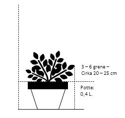 Potte 0,4 liter,- 20-25 cm. 3-6 grene