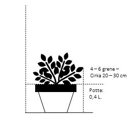 Potte 0,4 liter,- 20-30 cm. 4-6 grene