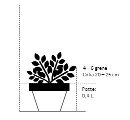Potte 0,4 liter,- 20-25 cm. 4-6 grene