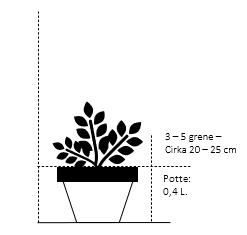 Potte 0,4 liter,- 20-25 cm. 3-5 grene
