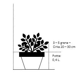Potte 0,4 liter,- 20-30 cm. 3-5 grene