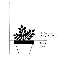 Potte 0,4 liter,- 15-20 cm. 3-5 grene
