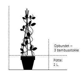 Potte 2,0 liter,- 3 bambusstokke