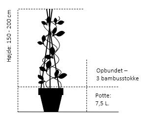 Potte 7,5 liter,- 3 bambusstokke, opbundet 150-200 cm.