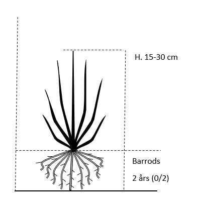 Barrods,- 2 års (0/2) 15-30 cm.