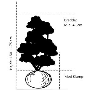 Med klump,- 150-175 cm. Bredde 45 cm.